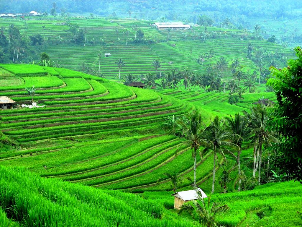 اندونيسيا